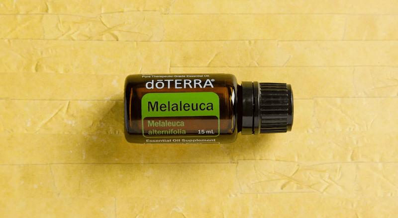 melaleuca essential oil doterra jillwiley teatree