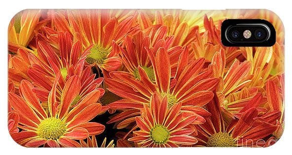 Fall Mums Phone Cases