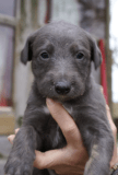 puppy low res 5