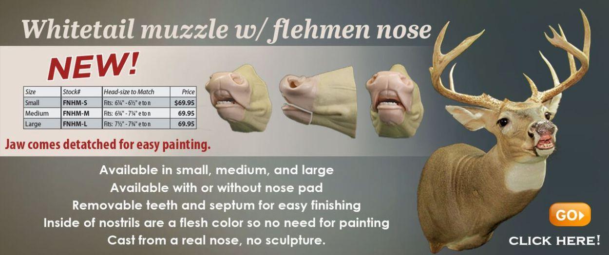 flehmen nose