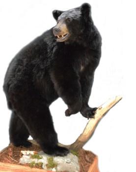 Black Bear mount by Dennis Cooper, L-134-2, Altered to Slack Jaw