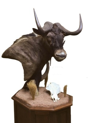 Black Wildebeest, G-GNU32P, Mount by JIm Allred, Right turn, Pedestal