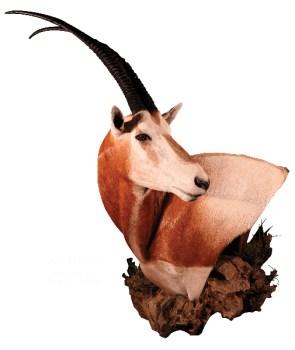 Scimitar, Horned Oryx, SHO20, Mount by Robert Utne, Pedestal, Hard Left Turn