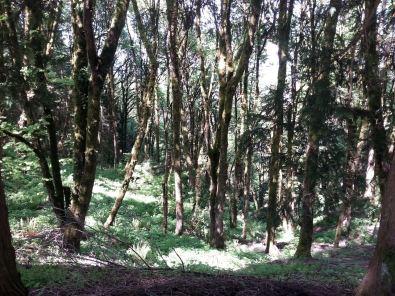 Portland hillside