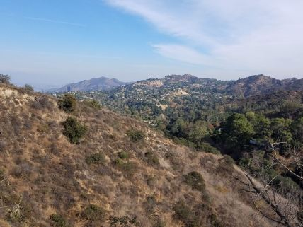 View of Hollywood Hills from Wilacre trail.