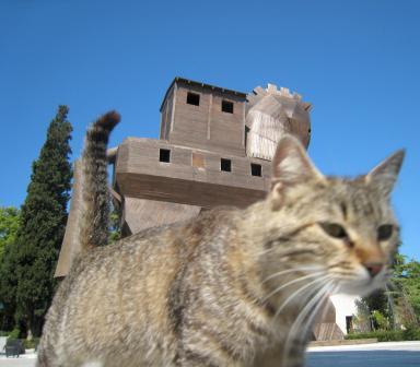 731 Trojan Cat