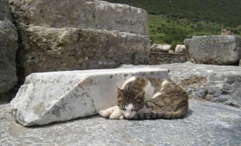 800 Cat Ruins