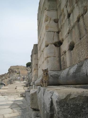 834 Cat Ruins