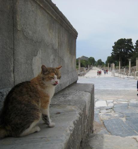 844 Cat Ruins