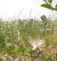 879 Flower