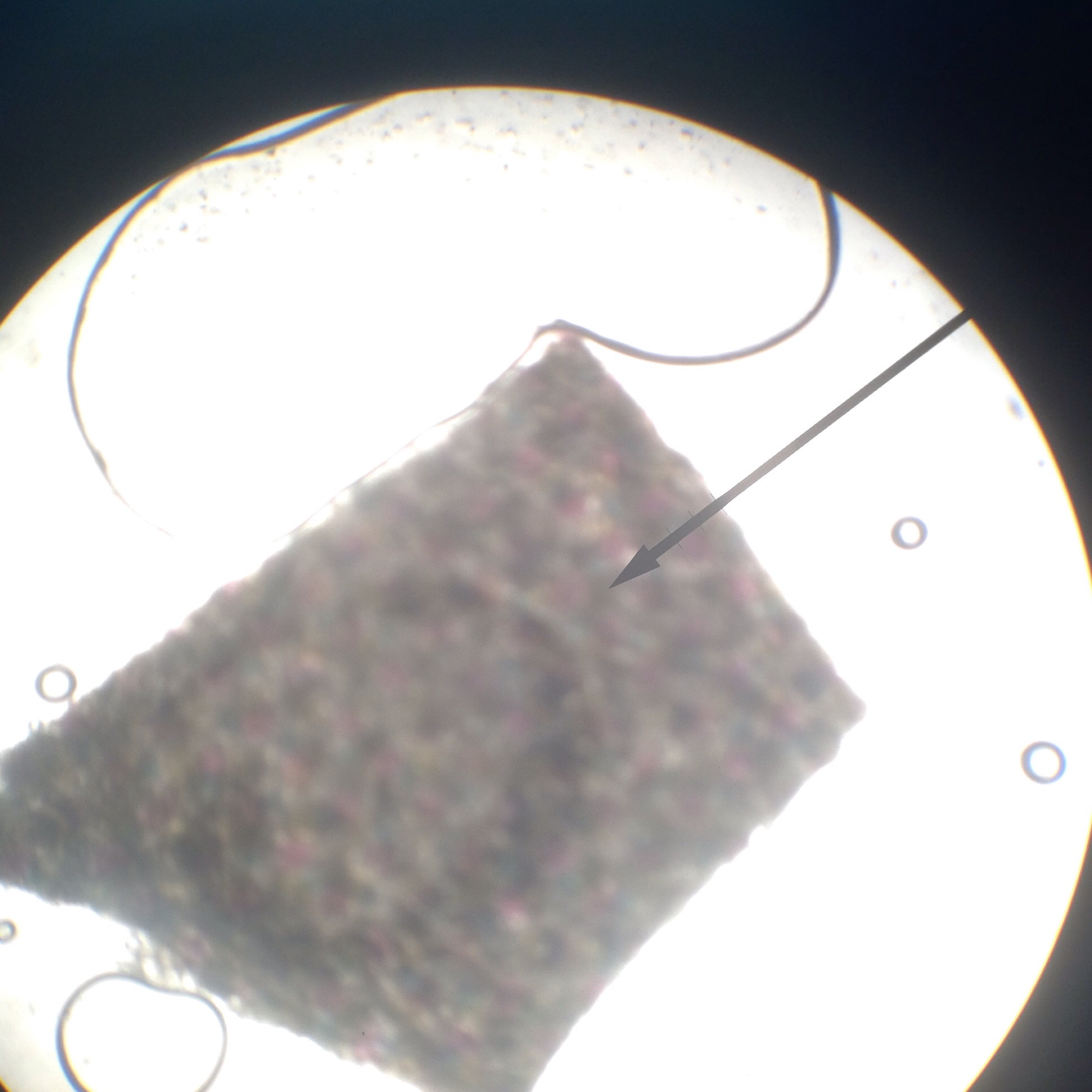 Letter E Microscope Lab Lab Activity The Compound