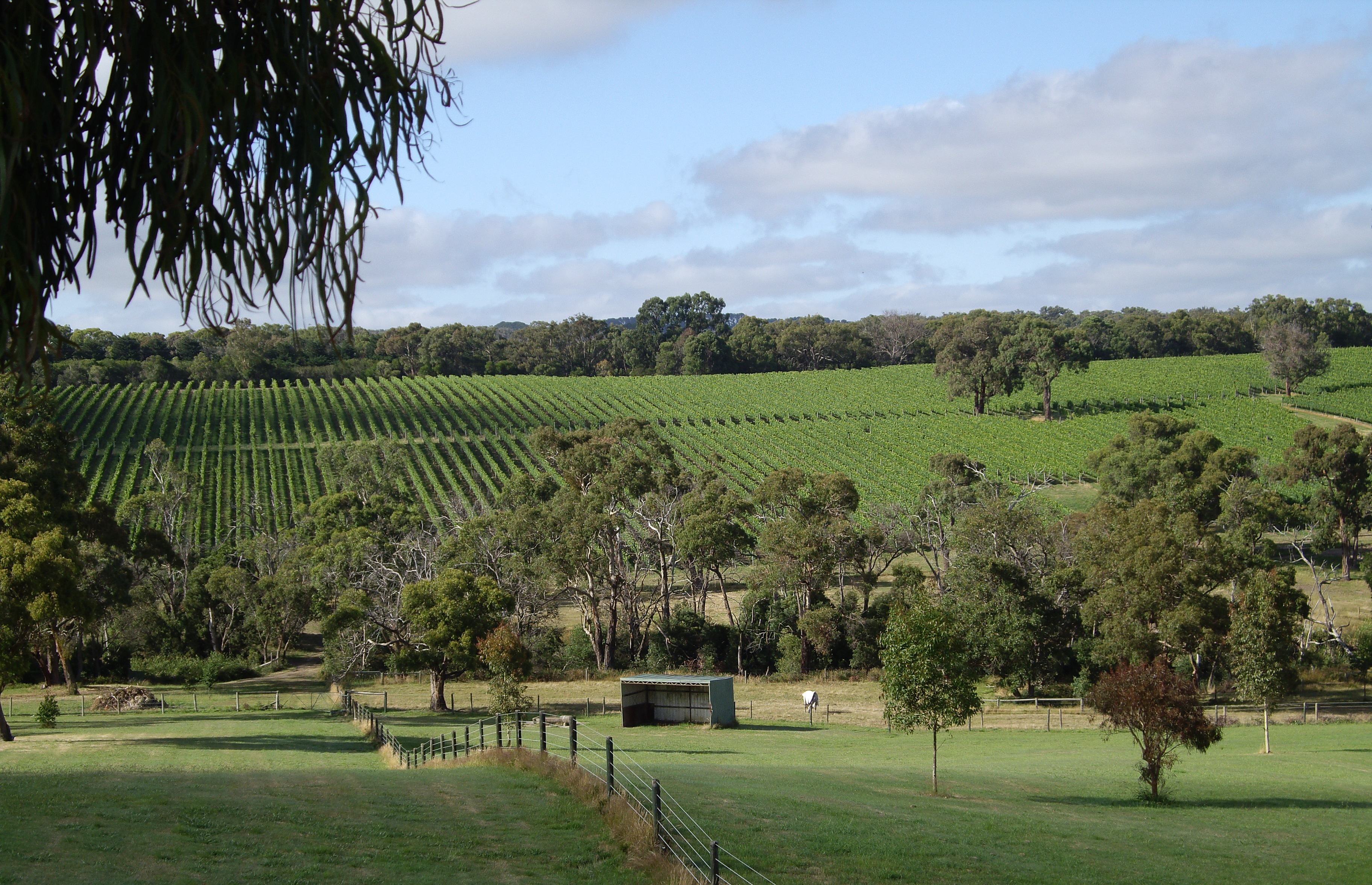 morningtonwines