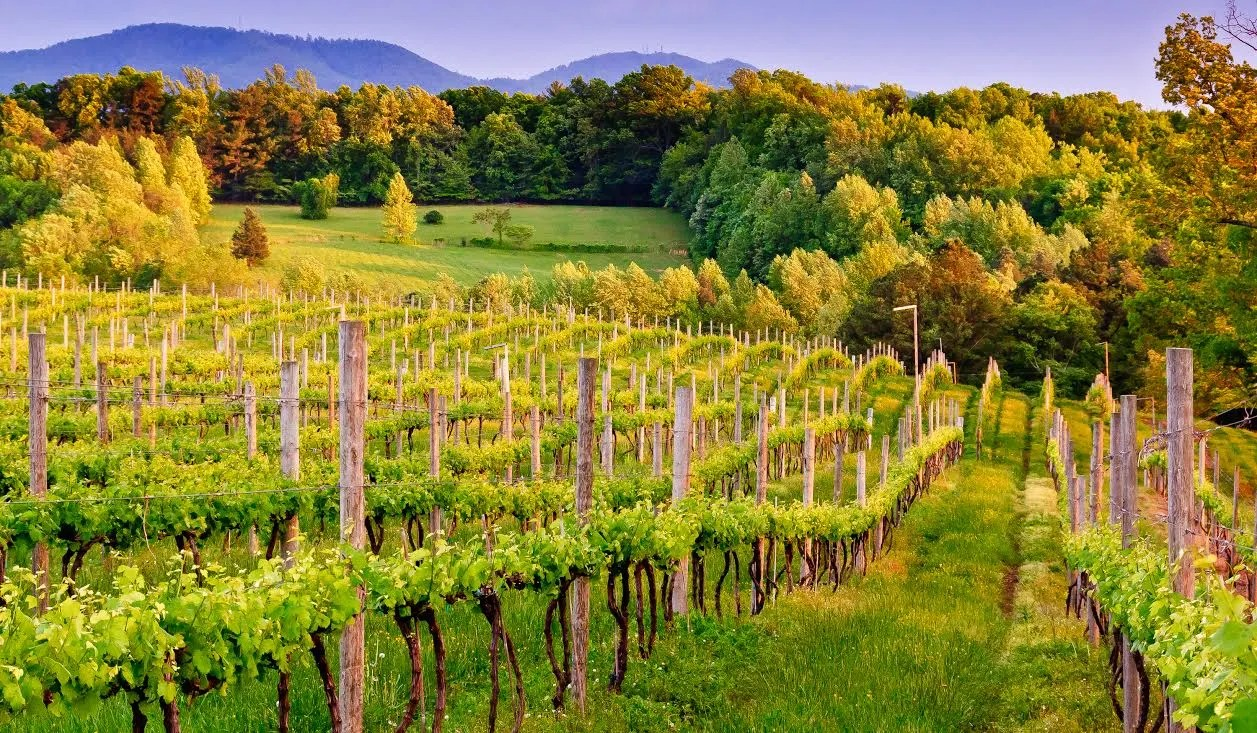Virginia Winery - Courtesy Charlottesville CVB