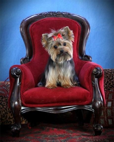 Pet Portraits Fort Lauderdale