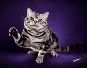 cat-portraits-pet-photography-1