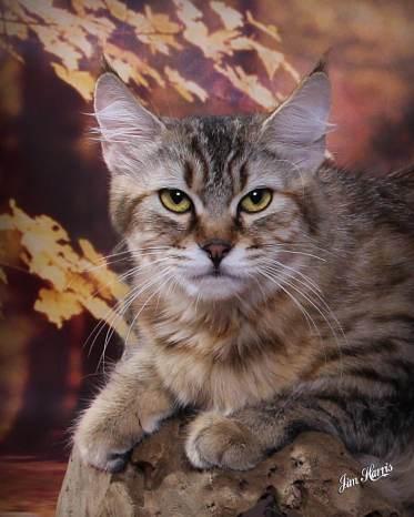 cat-portraits-pet-photography-2