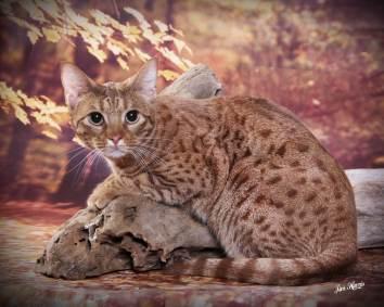 cat-portraits-pet-photography-3