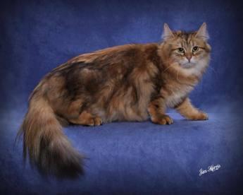 cat-portraits-pet-photography-8