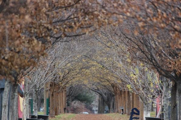 congressional-cemetery-washington-dc_15765877738_o