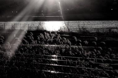 sunrise-on-the-anacostia-river_16332715618_o