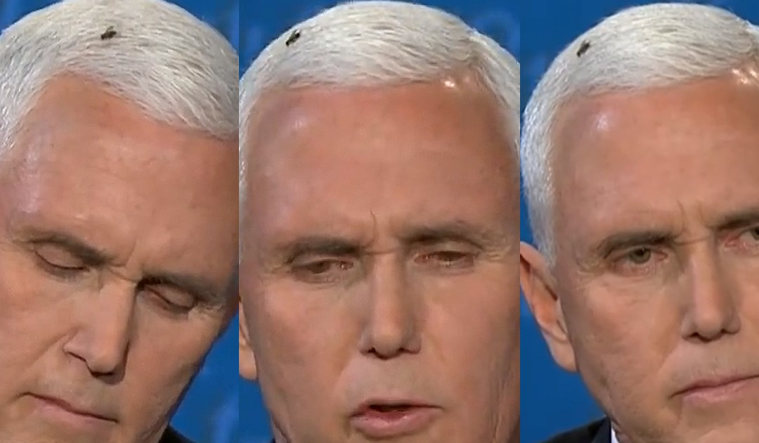 Biden Fundraises Off Of Fly On Pence's Head – 'Help This Campaign Fly'
