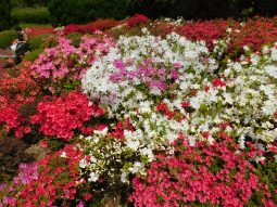 Kyoto botanical garden 024