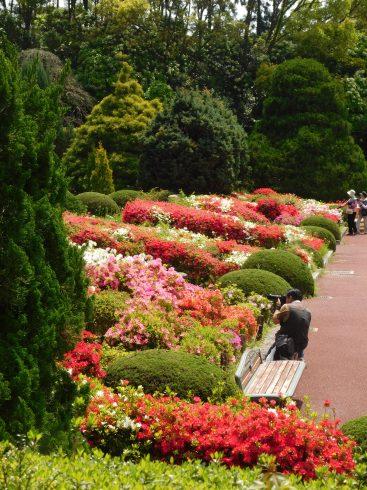 Kyoto botanical garden 025