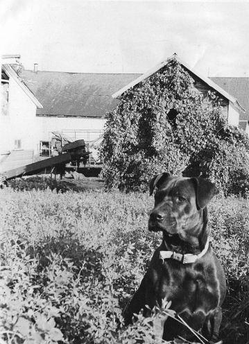 film dog