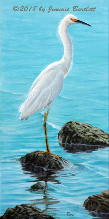 White Egret on the Rocks