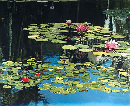 water_lillies-1.jpg
