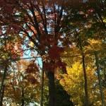 紅葉がきれいだった西野から平和方面、五天山