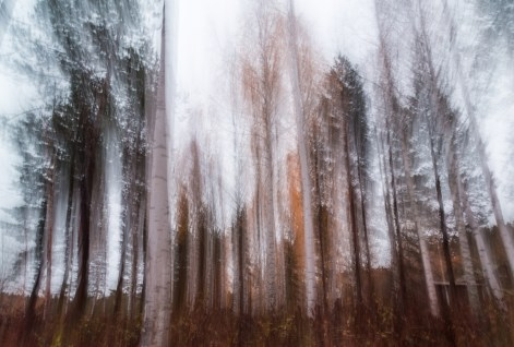 Suddiga Träd Vid Borgsjön
