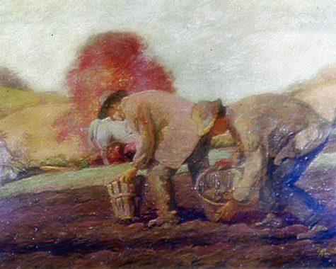 Diggin in field