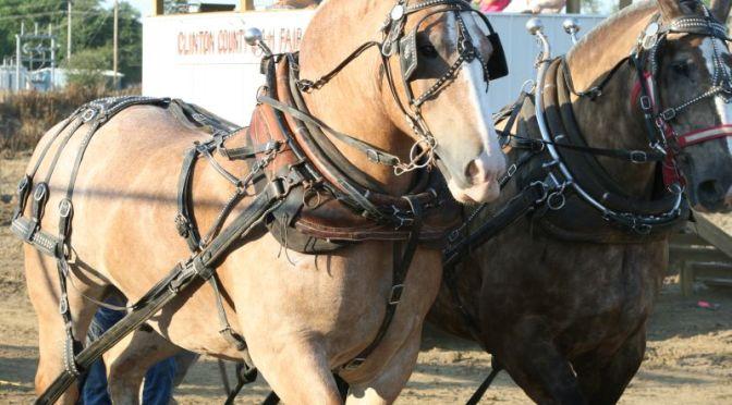 Draft Horse Pull (2009)