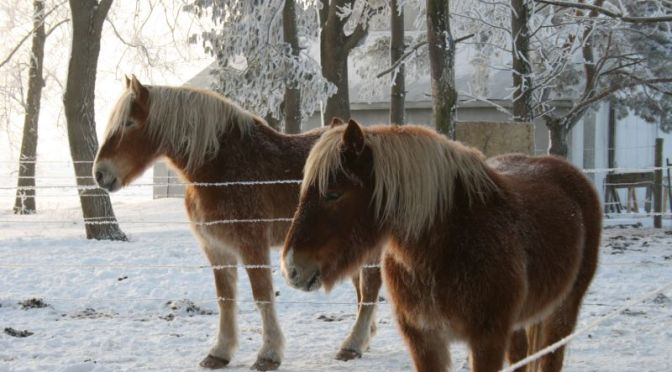 Horses in Winter (2010)