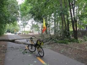 Jim-Schmid's-Bacchetta-Giro-recumbent-down-tree-Minuteman-Bikeway-MA-9-5-2016