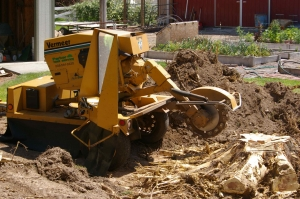 Jim's Tree Stump Removal and Stump Grinding Services