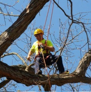 Jim's Tree Removal, Pruning, Cutting and Lopping Services