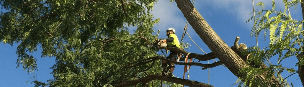 Gold Coast Tree Surgeon pruning trees for Gold Coast City Coucil