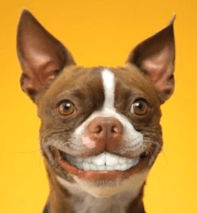 Doggie_Dentures