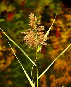 013-v-vermont-roadside-weed