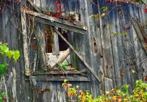 025-vermont-barn-window