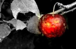 056-vermont-apple