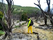 hutan mati dan pondok selada