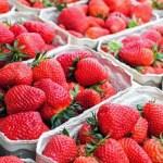 ふるさと納税でもらえる「いちご」厳選8つ!大粒のイチゴを手に入れよう。