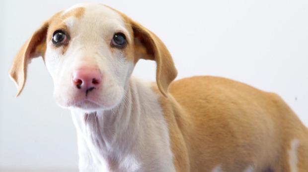 เจ้า Lucky 2 ใน 11 ลูกสุนัขที่รอดชีวิต ถูกก้อนหินทุบหัวแล้วไม่ตาย