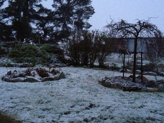 หิมะตกที่ Cooma ในวันที่ 30 พ.ค. 3016 : ภาพชั่วคราวจากวิทยุ 2GB