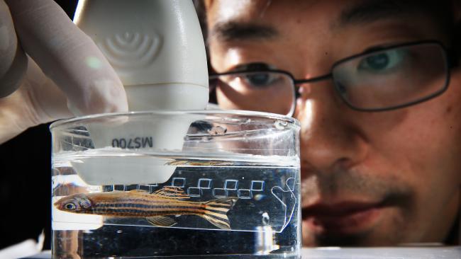 ดร. Louis Wang กำลังใช้เครื่องตรวจหัวใจด้วยคลื่นเสียงความถี่สูง (echo cardiogram) : ภาพชั่วคราวจากนสพ. The Telegraph
