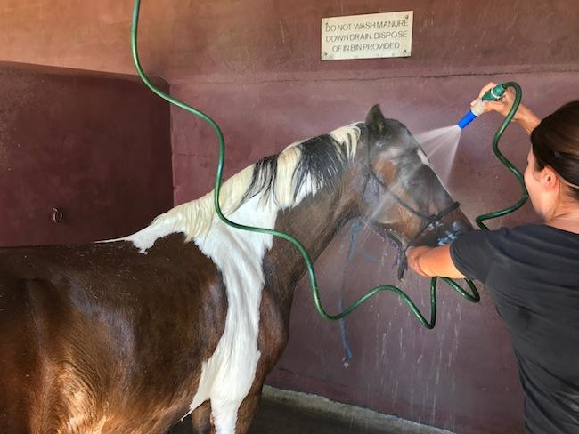 คนเลี้ยงม้ากำลังฉีดน้ำทำความเย็นให้กับม้าที่โรงเรียนสอนขี่ม้า Budapest Riding School ใน Centennial Park : ภาพจากคุณ Elizabeth Fortescue