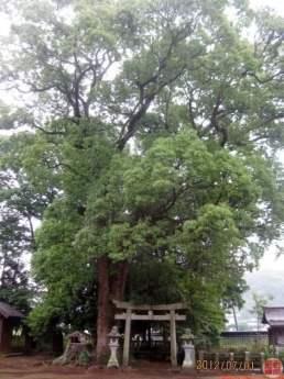 鴨神社(式内 神野神社論社)
